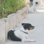 Собачки ждут косточки у ресторана